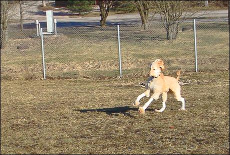 Hundparken1.jpg