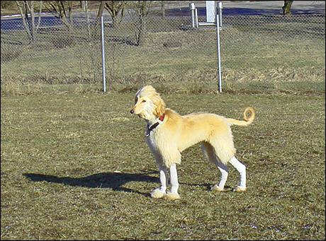 Hundparken2.jpg