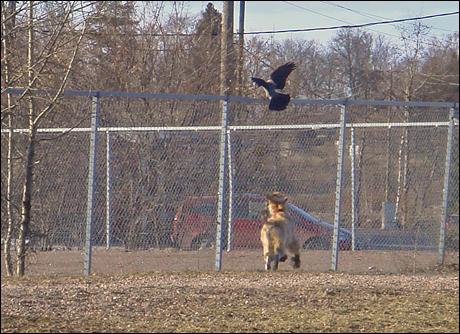 Hundparken3.jpg