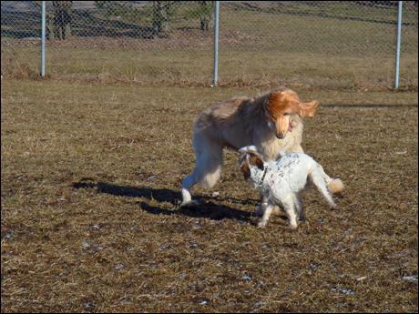 Hundparken4.jpg